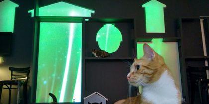 В Петербурге придумали световое шоу для котов.