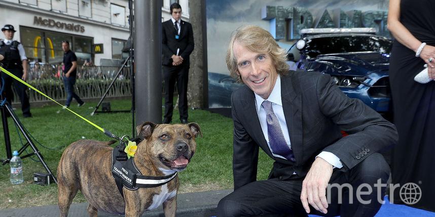 Майкл Бэй и собака Фрейя, которая снималась в Трансформерах. Фото Getty