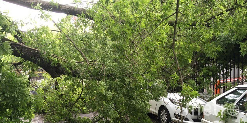 Сильный ветер в Москве валит деревья. Фото скриншот vk.com/mskdtp