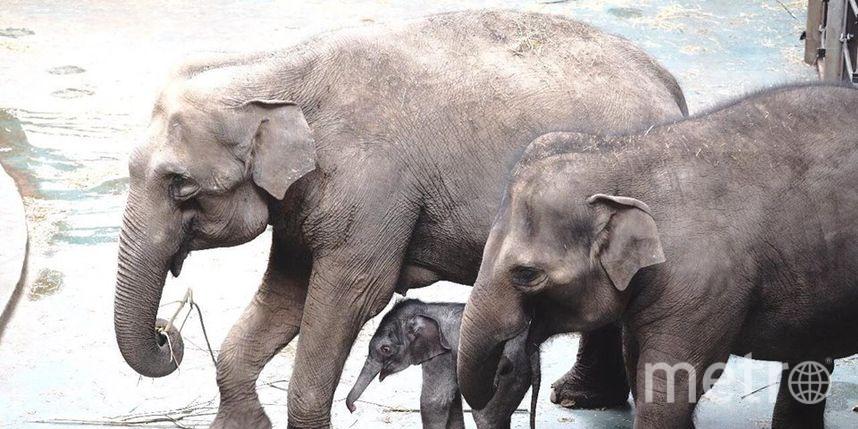 Слоны Московского зоопарка. Фото mos.ru