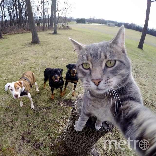 1. Селфи кота.
