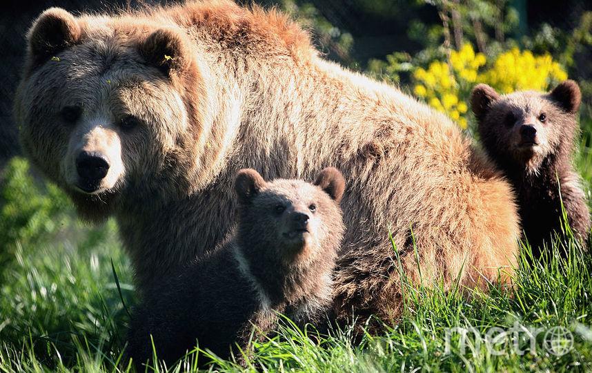 Просидевший трое суток вмашине медвежонок оказался артистом Московского культурного центра