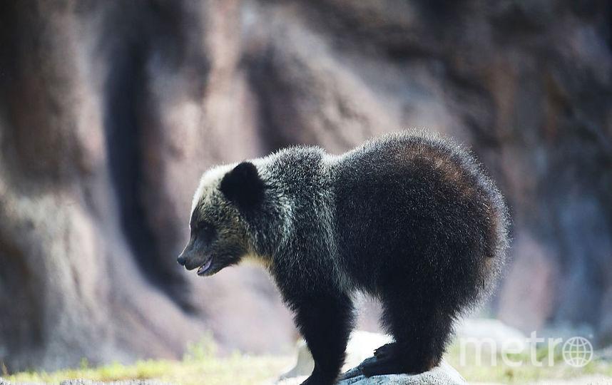 Просидевшего некоторое количество дней  вмашине медвежонка отыскали  встолице