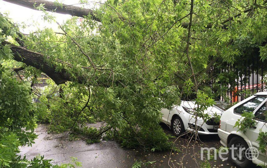 В Москве до вечера объявлено штормовое предупреждение (Архивное фото). Фото скриншот vk.com/mskdtp