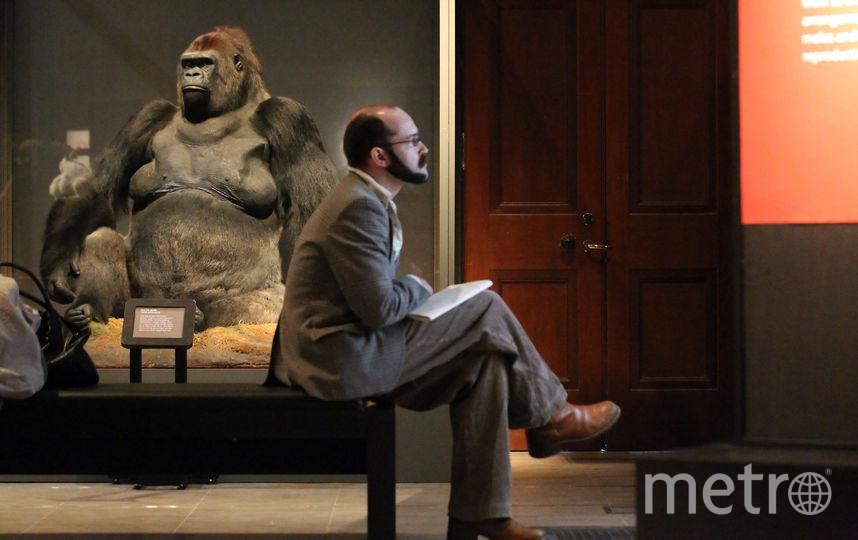 Одна из наиболее востребованных тем среди просветителей – эволюция человека и цивилизации. Фото Getty