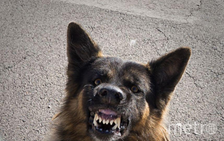 В Ставропольском крае собака загрызла двухлетнюю девочку. Фото Getty