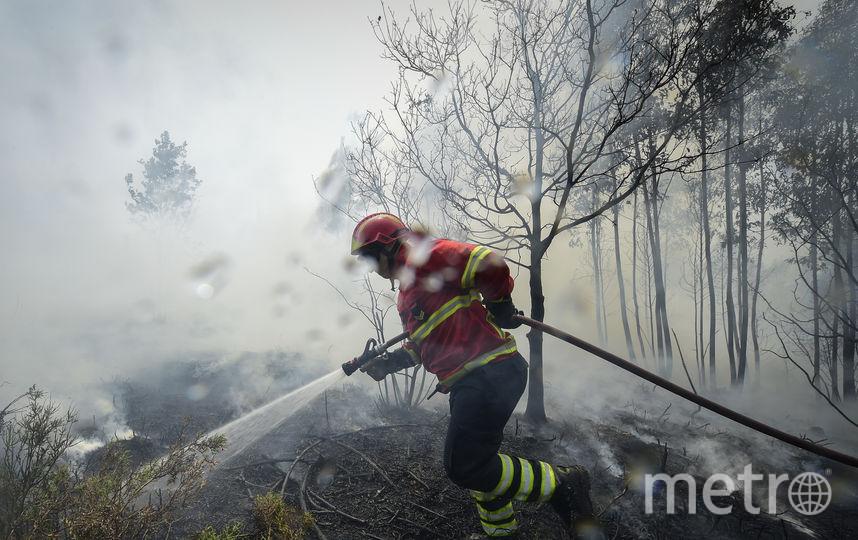 Предпосылкой лесных пожаров вПортугалии мог стать поджог
