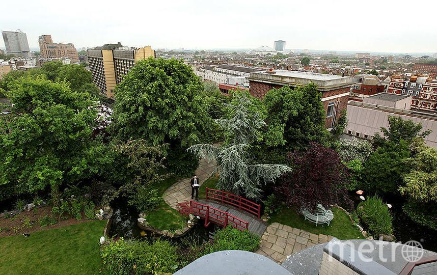 Крыши построенных в рамках реновации домов превратят в сады. Фото Getty