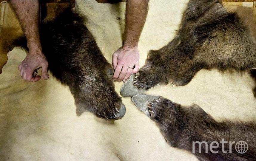 Медвежьи лапы. Фото Getty