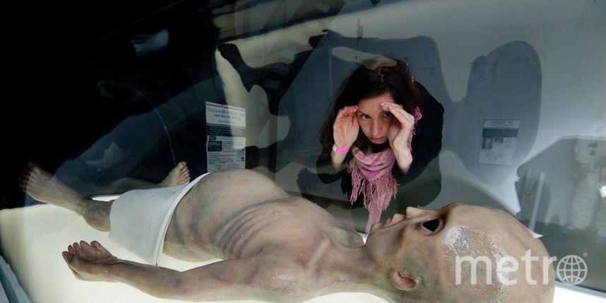 Чем удивят петербуржцев на выставке мировых рекордов