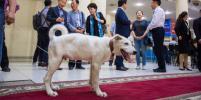 В Якутии презентовали клонированных щенков охотничьей лайки