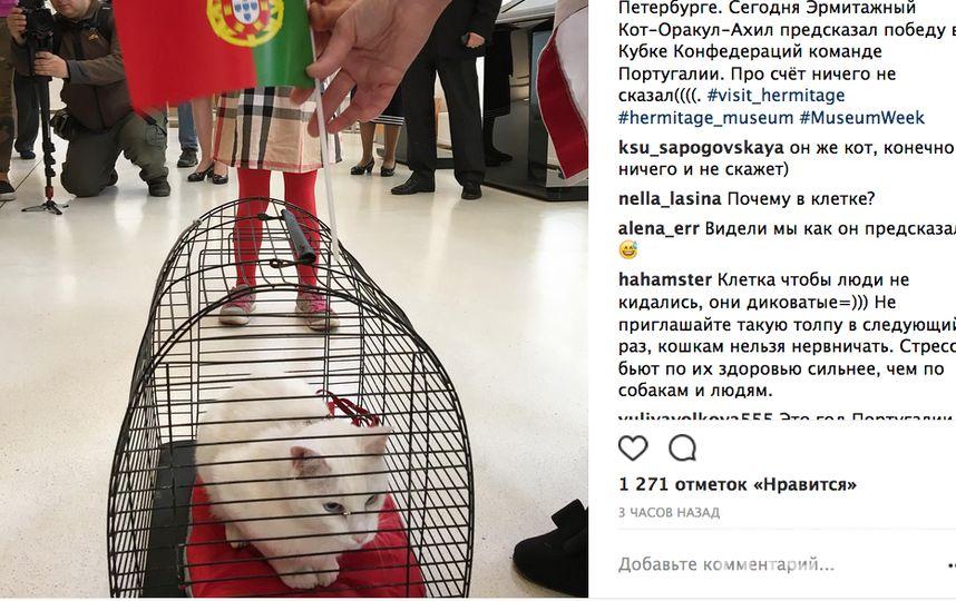 Кот Ахилл предсказал победу сборной Португалии на матче с Новой Зеландией. Фото Скриншот Instagram/hermitage_museum