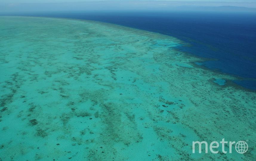 Большой Барьерный риф. Фото Getty