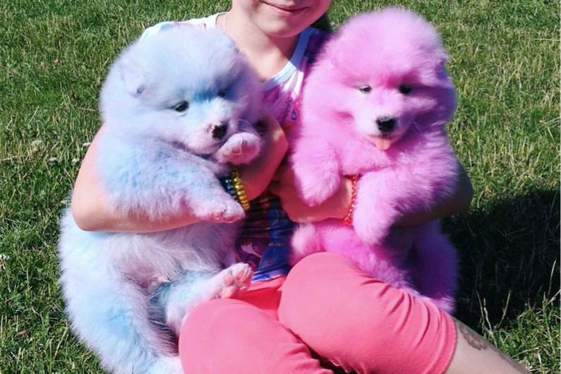 Покрашенные собаки. Фото скриншот Instagram