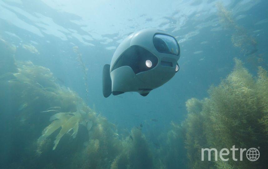 Робот за роботой. Фото RoboSea