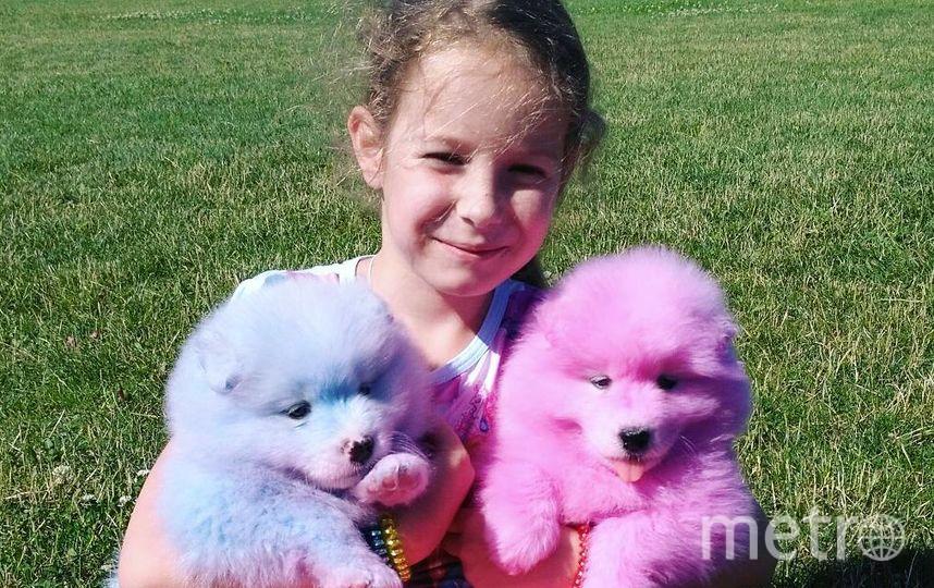 Щенки, пришедшие на смену подросшим собакам. Фото Предоставлено фондом Husky Help.