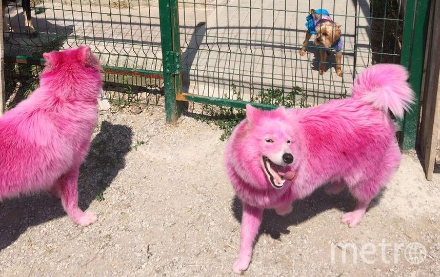 Сейчас собаки находятся на передержке и ждут отъезда в Москву к волонтёрам. Фото Предоставлено фондом Husky Help.
