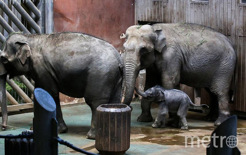 В зоопарке покажут самые крепкие пары. Фото mos.ru