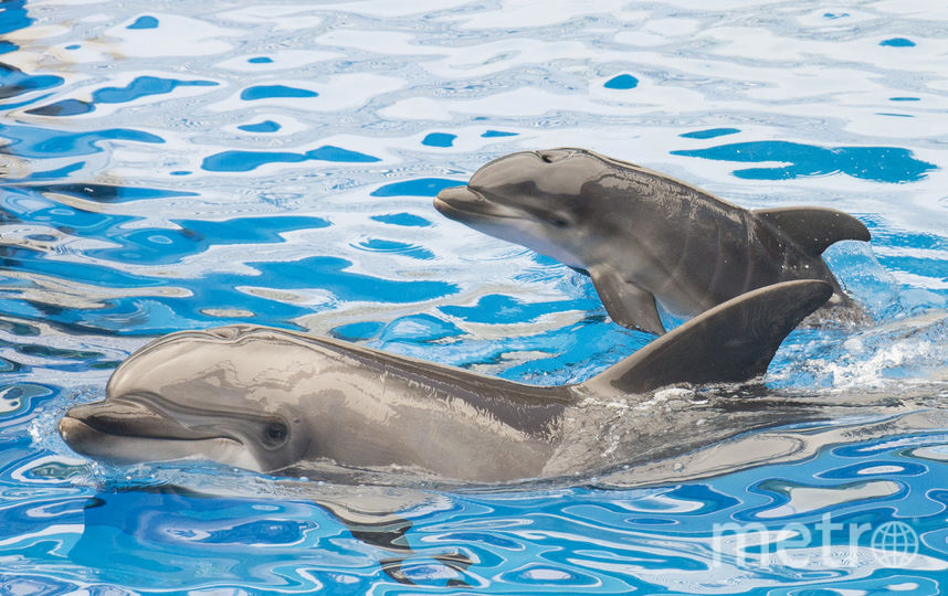 Дельфины. Фото Getty