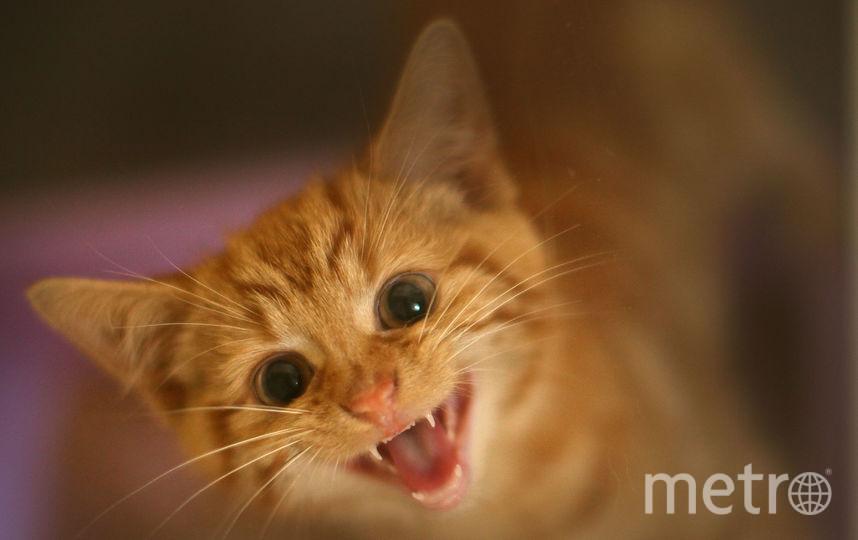 Послушать мурчание кота нон-стоп можно насайте вглобальной паутине