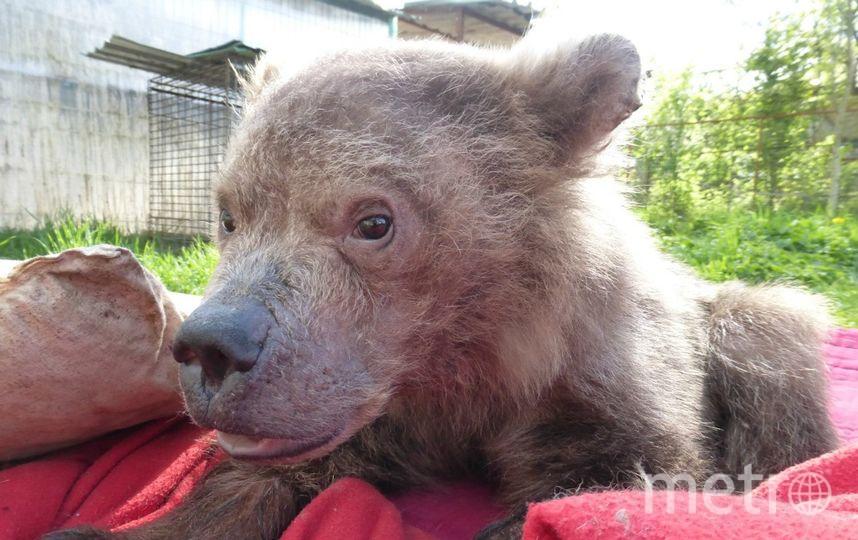 Медведь Сеня. Фото Предоставлено центром