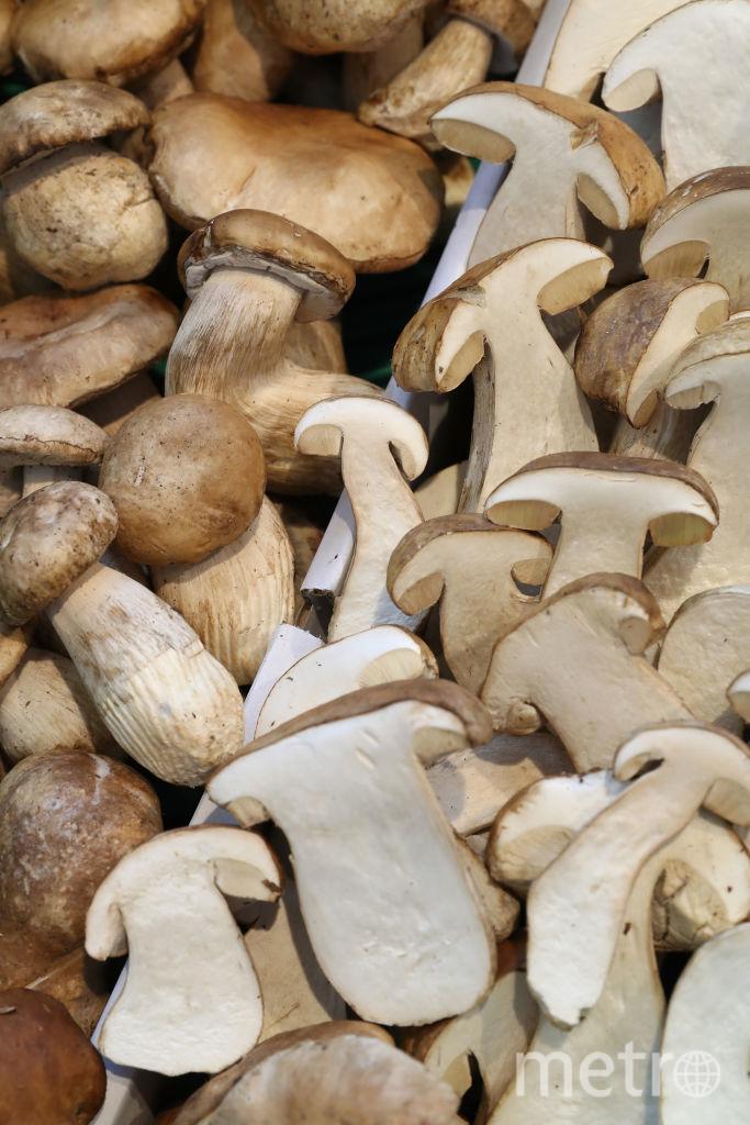 Из-за холодного лета грибной сезон в Подмосковье отложен. Фото Getty