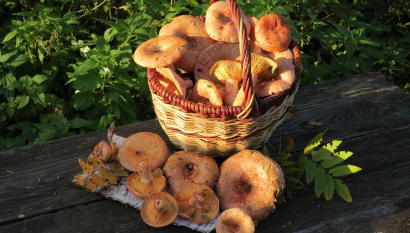 Из-за холодного лета грибной сезон в Подмосковье отложен. Фото mos.ru