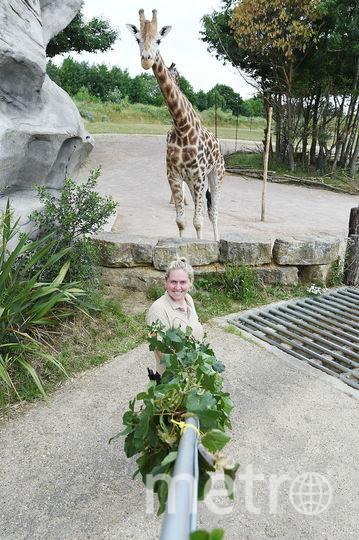 Селфи с жирафом больше не проблема. Фото Getty