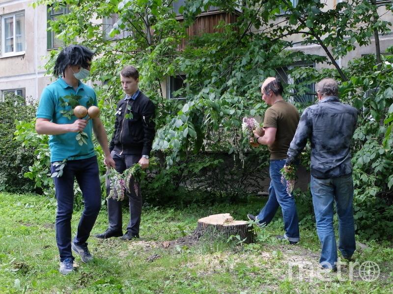во дворе дома №15 по Бассейной улице коммунальщики спилили два здоровых ясеня.