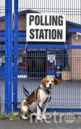 Собака породы бигль. Фото Getty