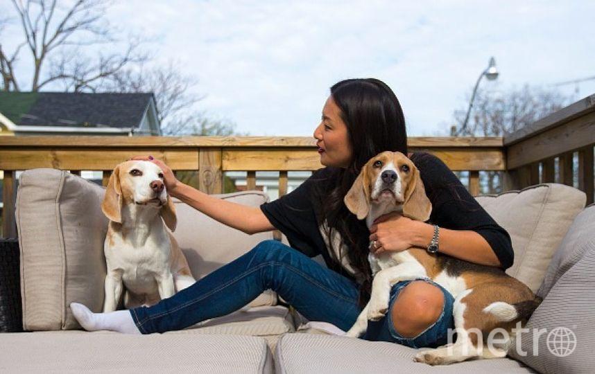 Собаки породы бигль и девушка. Фото Getty