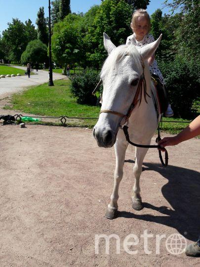 """Животные зарабатывают деньги в центре Петербурга. Фото Софья Сажнева, """"Metro"""""""