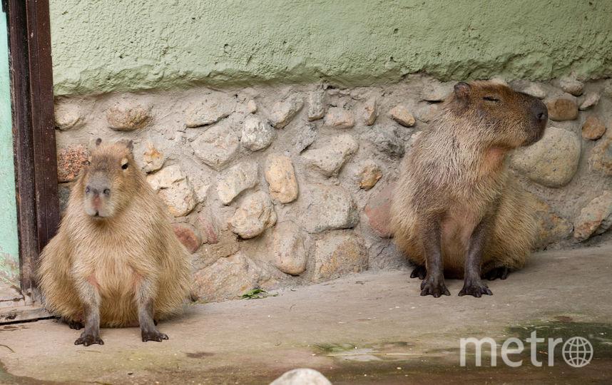 Московский зоопарк. Фото Василий Кузьмичёнок
