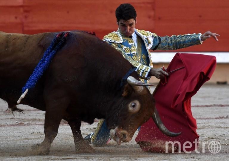 Участники забега быков в Испании. Фото AFP