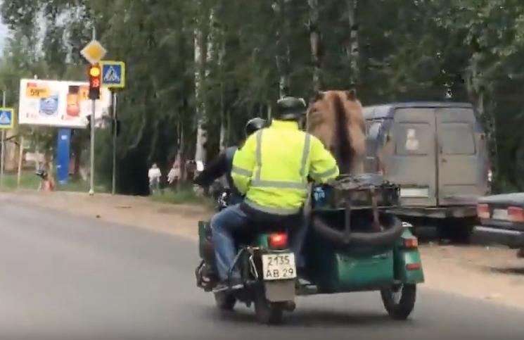 Медведь на мотоцикле разъезжал по Архангельску. Фото Скриншот Youtube