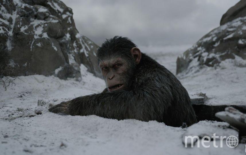 """Планета обезьян: Война"". Фото kinopoisk.ru"
