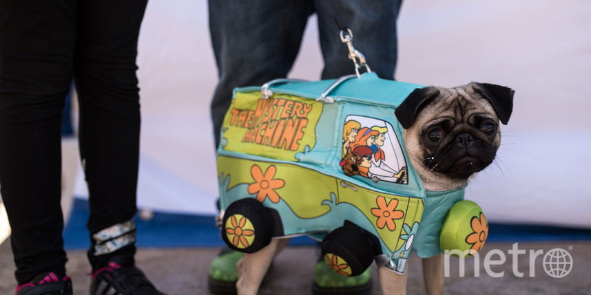 PugFest Manchester. Фото AFP