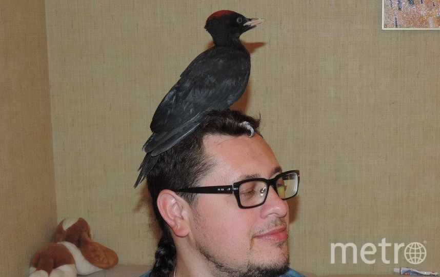 Петербуржец приручил диких птиц. Фото все - Алена Бобрович.
