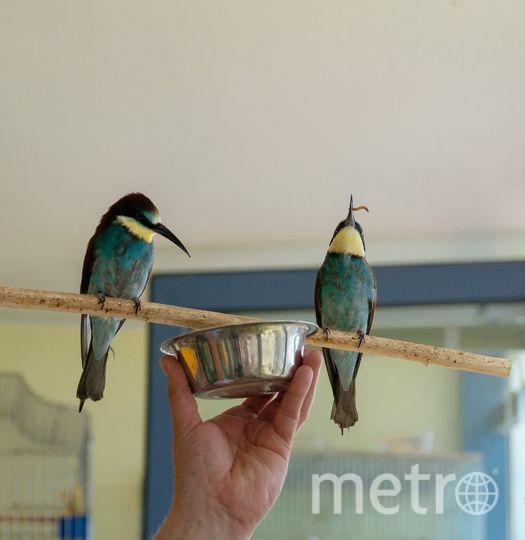 Петербуржец приручил диких птиц.