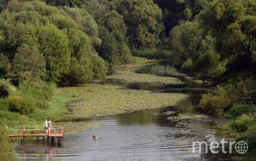 Отдыхающие на речке в Подмосковье. Фото РИА Новости