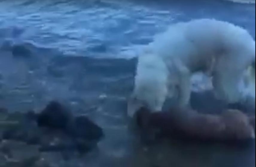 Шторм спасает оленёнка. Фото Скриншот Youtube