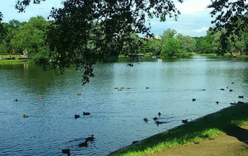 Петербургским паркам грозит исчезновение из-за вредителей. Фото Скриншот Instagram