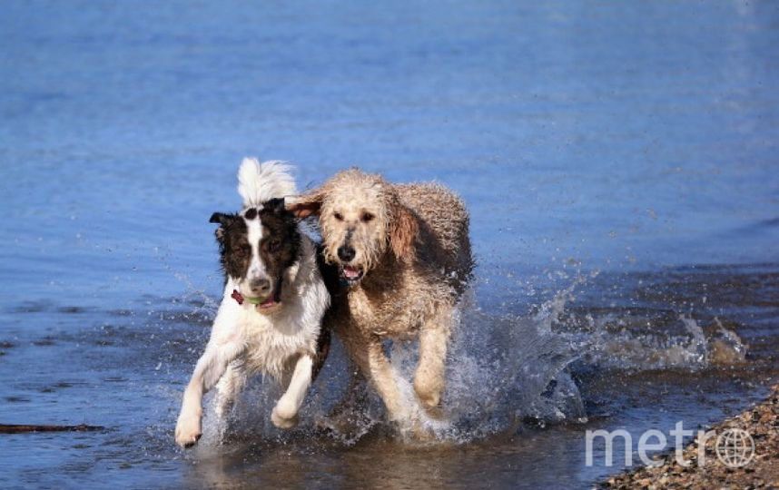 Собака. Фото Getty