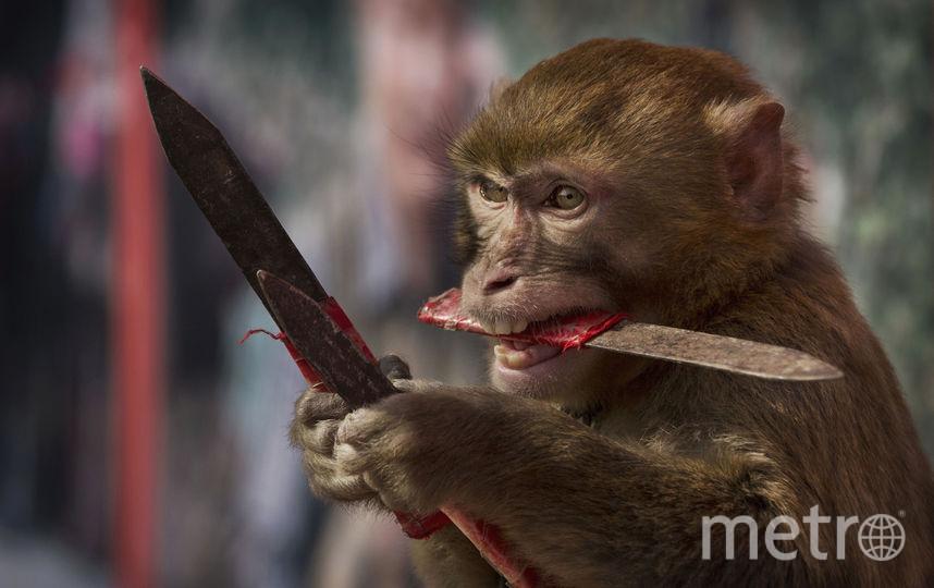 Массовые поиски под Рязанью: неменее 70 человек разыскивают обезьяну, укусившую женщину