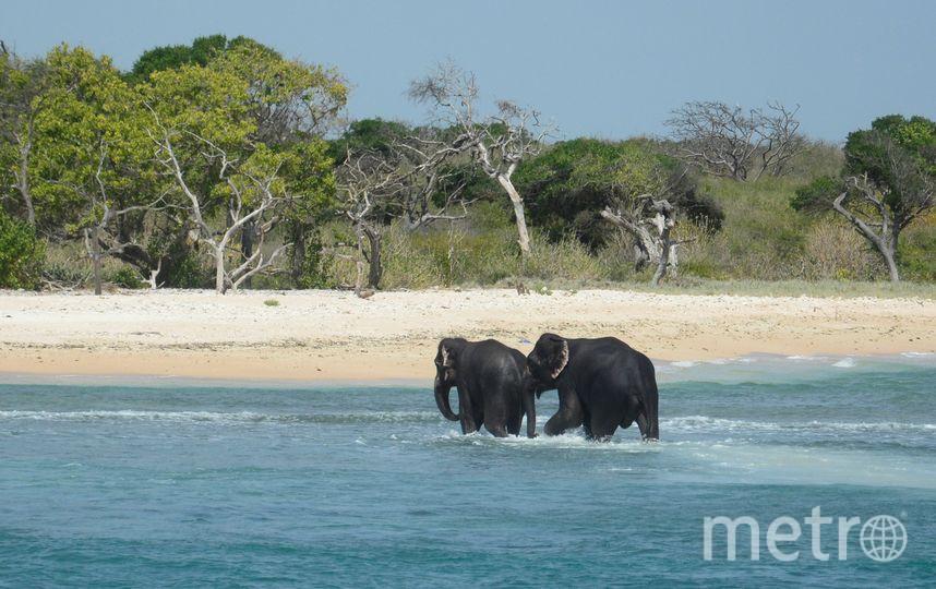 Операция по спасению слонов. Фото AFP