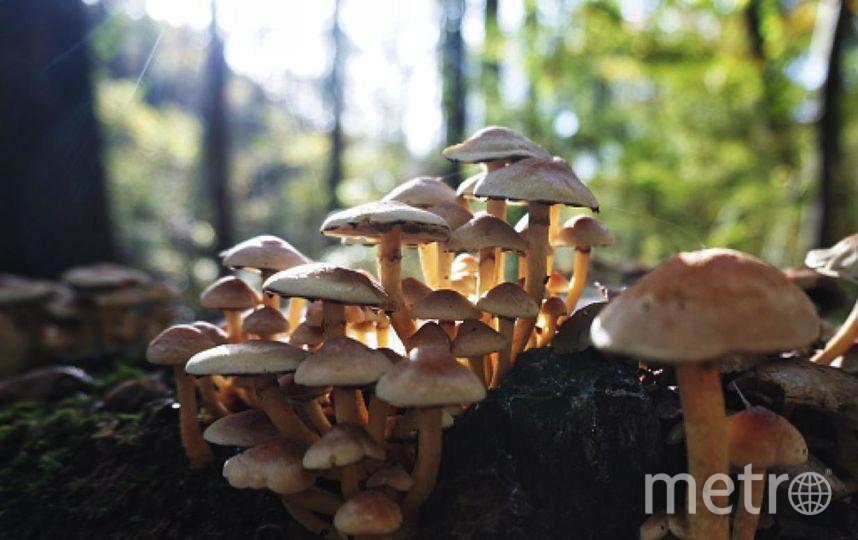 В Свердловской области мальчика убило молнией во время сбора грибов. Фото Getty
