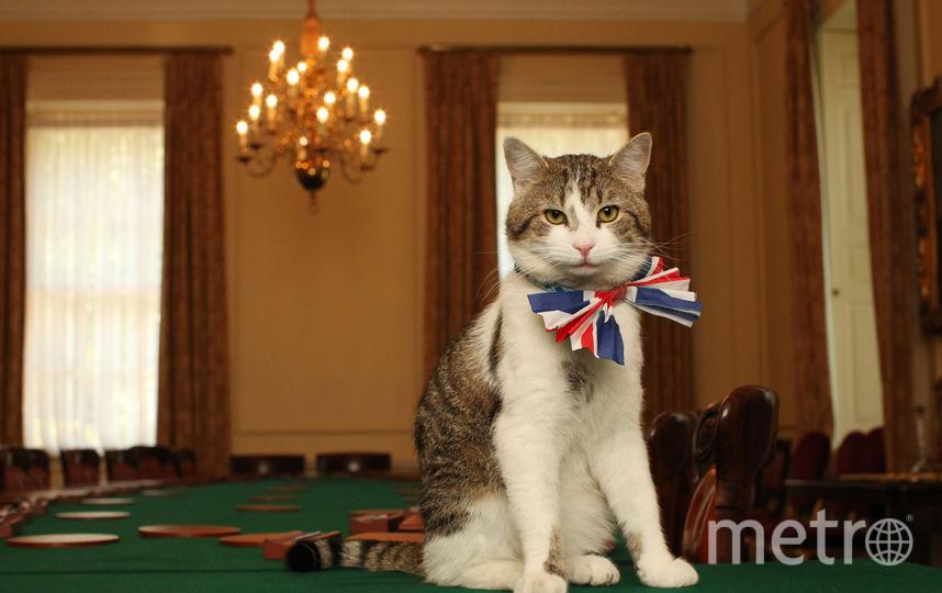 Учёные: Через 10 лет люди смогут понимать кошек и собак. Фото Getty
