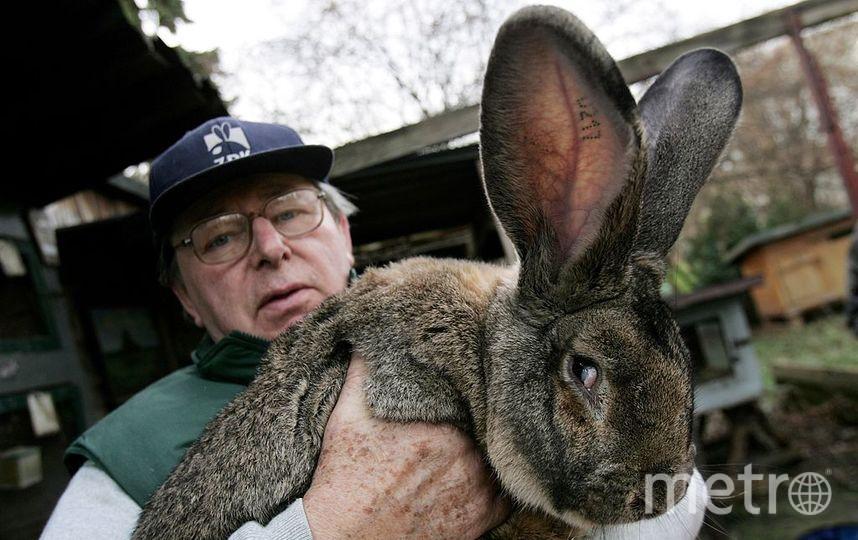 Кролик. Фото Getty
