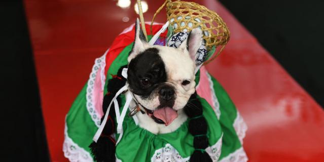 Фестиваль собак.