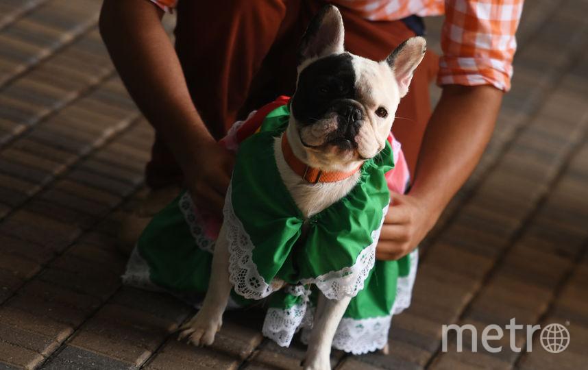 Фестиваль собак. Фото AFP